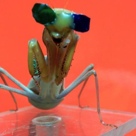 Dr Vivek Nityananda; Aliens amongst us: How to see the world like an insect
